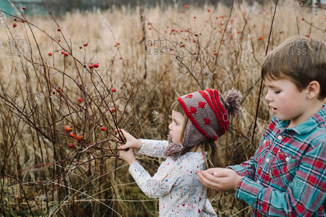 Brother and sister picking wild rose hips together