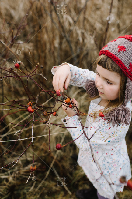 Girl picking wild rose hips
