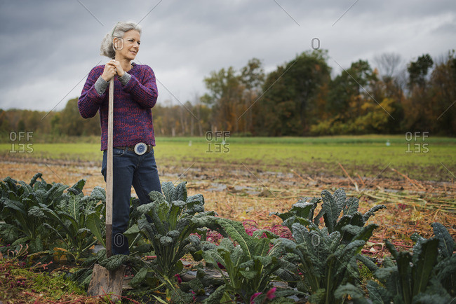 Organic Farmer at Work A woman leaning on a hoe among a line of cabbages