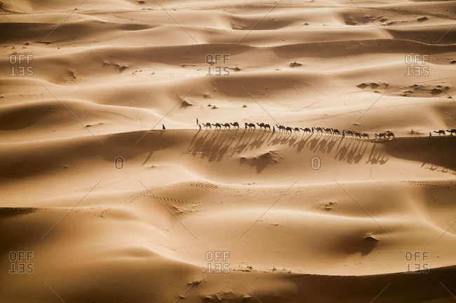 A caravan of camel merchants, rider and camels in a line, on the Sahara Desert sands