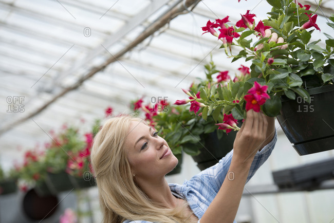 An organic flower plant nursery A woman working