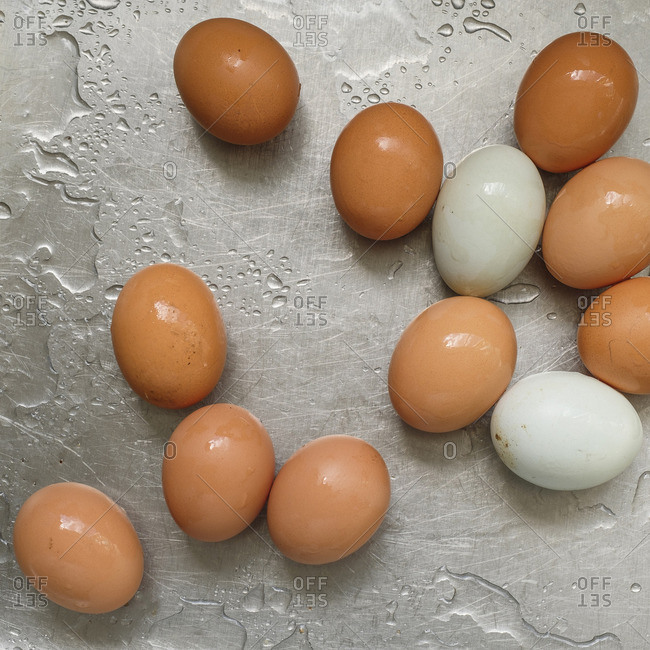 Chicken eggs on stainless steel