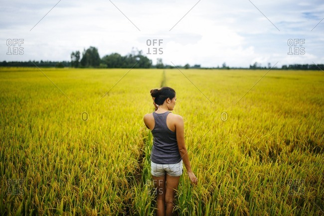 A young woman walking through a rice field in the Mekong Delta in southern Vietnam