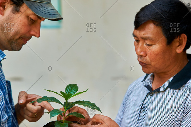Menglian, Yunnan, China - March 4, 2016: Learning about coffee seedlings