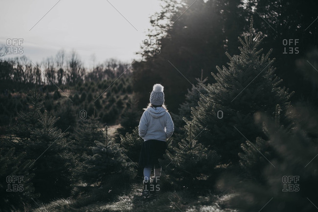 Little girl looking at pine trees