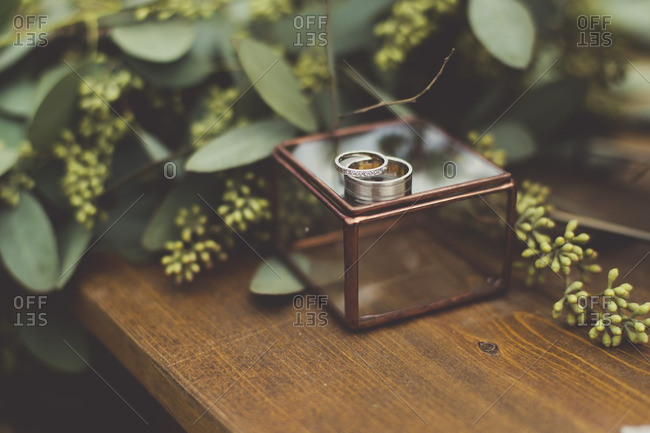 Wedding rings on a glass box by green leaves