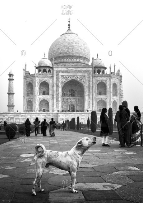 Agra, India - November 14, 2015: Dog and tourists in front of the Taj Mahal