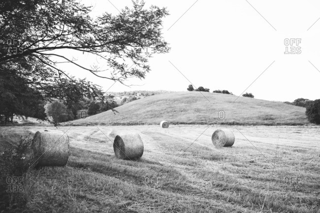 A field with bales of hay