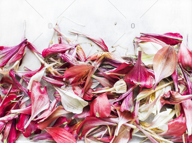 Dried flower petals in close up