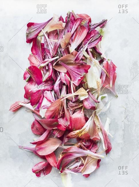 Flower petals in rectangle shape