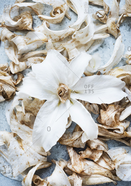 Dried and fresh lily petals