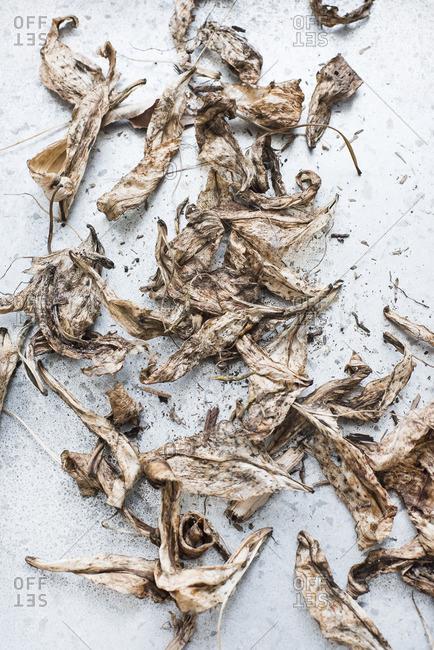 Still life of dried flower petals