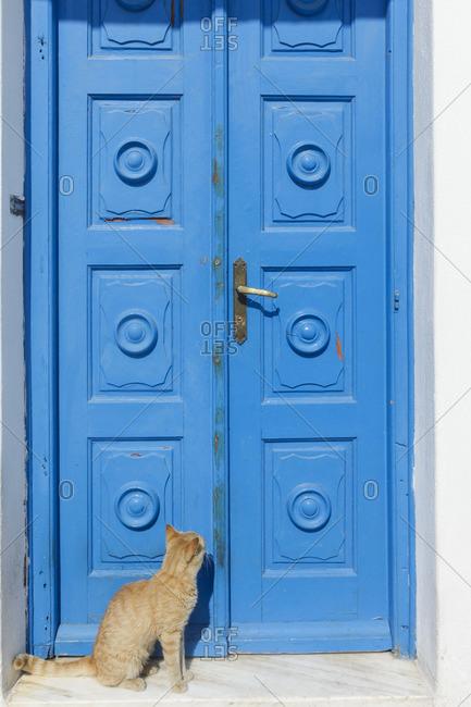 Cat by door in Mykonos, Greece