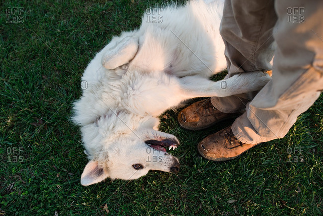 Dog lying on ground at person's feet