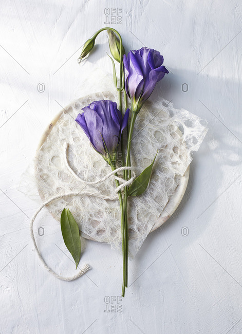 Purple flowers on a plate with white fibers