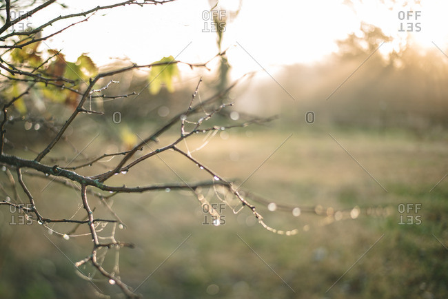 Close up of bare tree branches at sunset