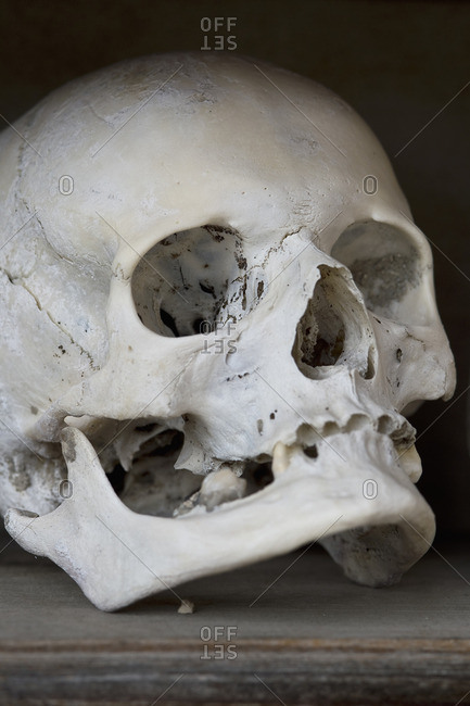 Skull in a charnel house