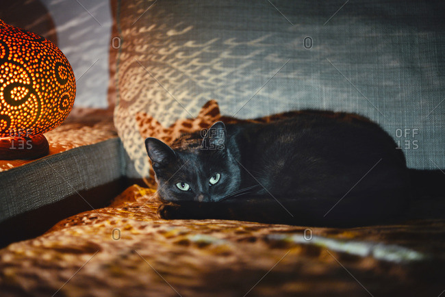 Cat lying on the couch next to a handmade pumpkin lamp