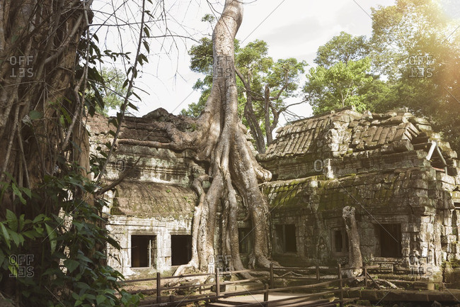 Cambodia- Siem Reap- Angkor- Ta Prohm temple