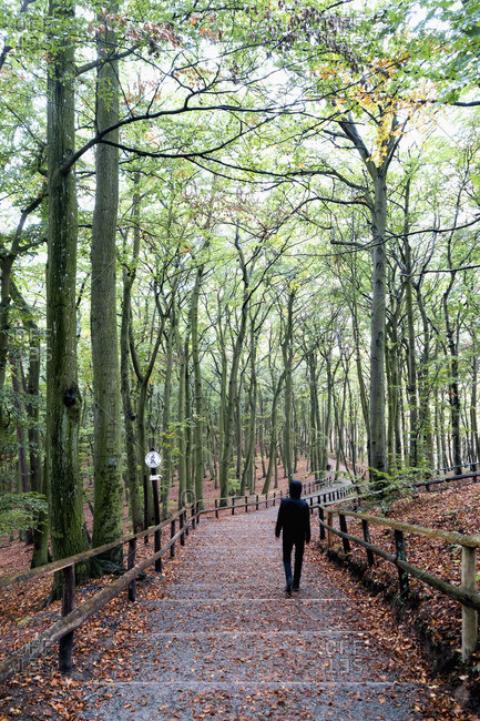 Poland- Misdroy- man walking in beech forest