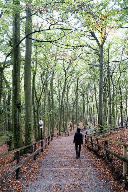 Poland- Misdroy- man walking in beech forest