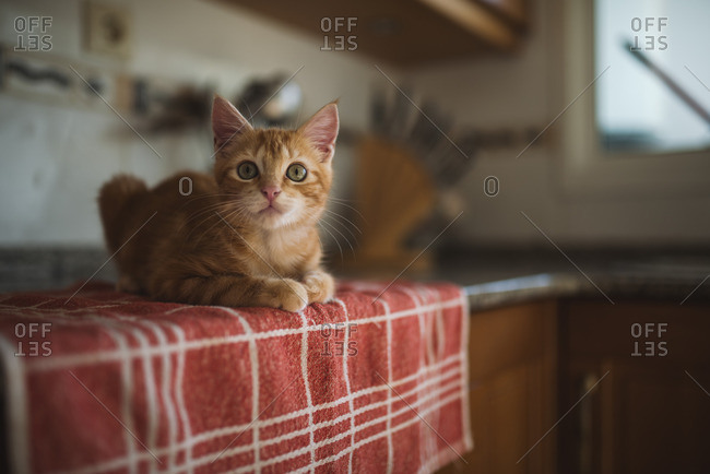 Portrait of kitten crouching on towel in the kitchen
