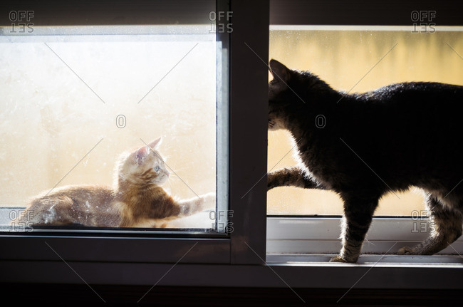 Kitten and adult cat playfighting on window sill
