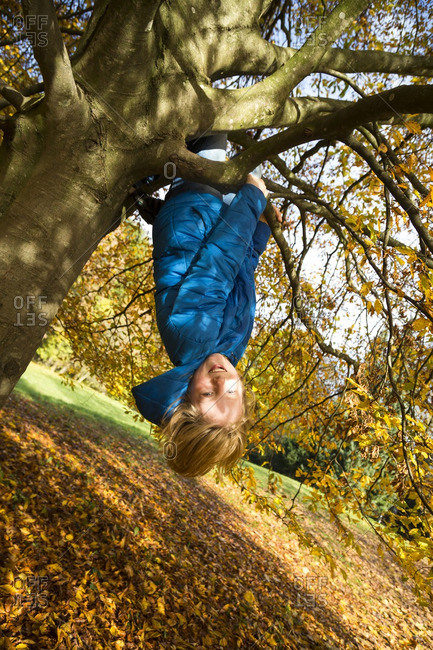 Boy climbing on tree in autumn