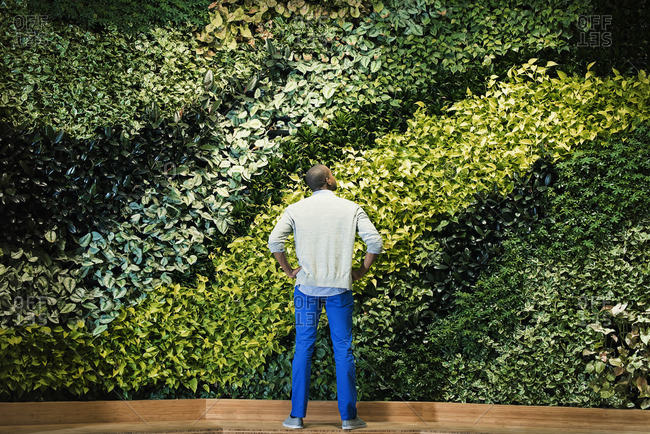 Young man standing in front of green plant wall- rear view