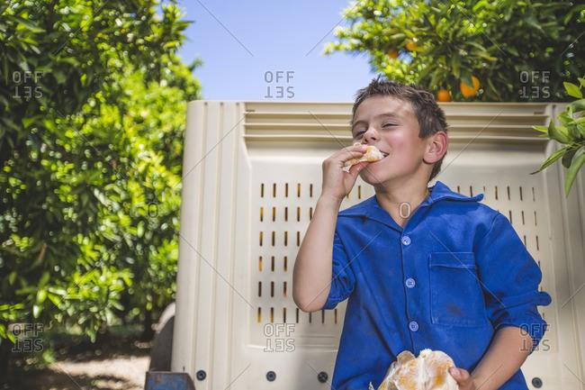 Boy sitting on trailer at orange plantation- eating orange