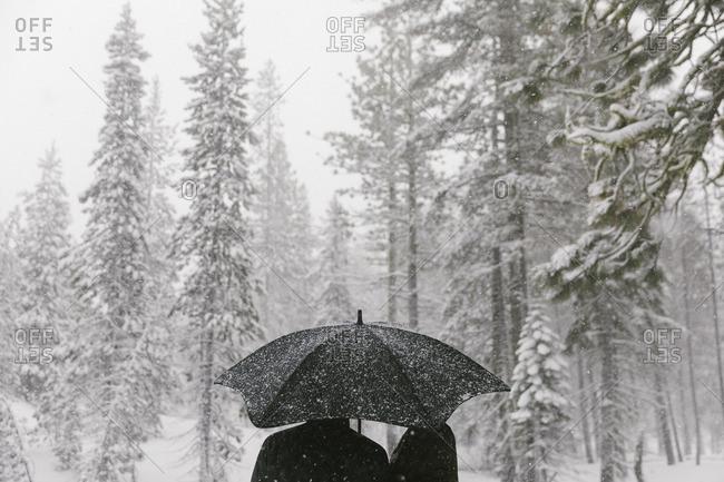 People under umbrella in winter woods