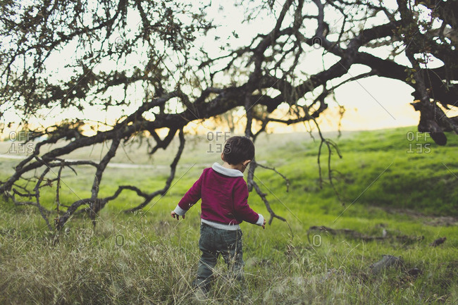 Toddler boy exploring field with gnarled tree branches