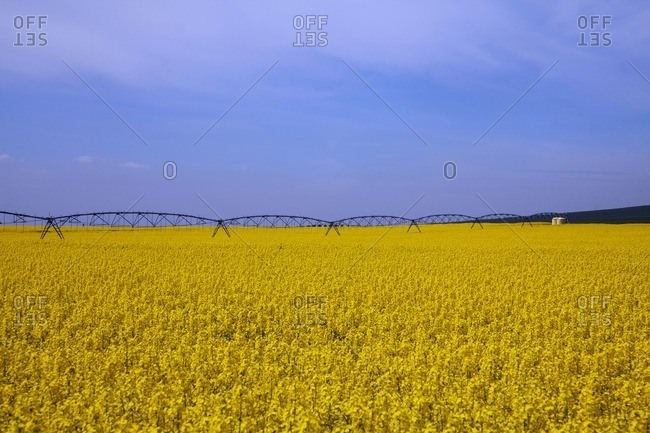 Irrigation system over Colza field near Madrid, Spain
