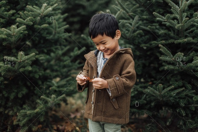 Cute young boy looking at leaf among pine trees
