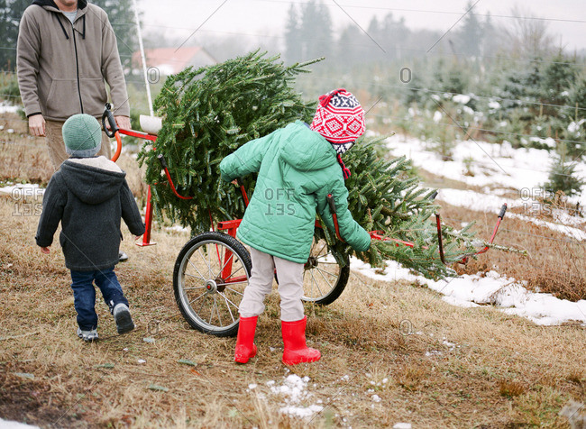 Family hauling Christmas tree with wagon