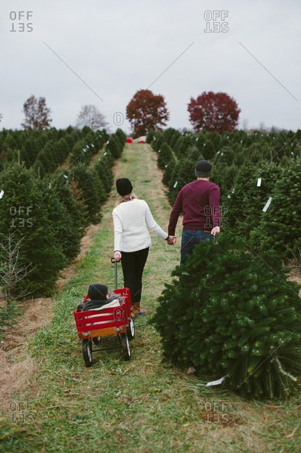 Parents and kid in wagon in tree farm