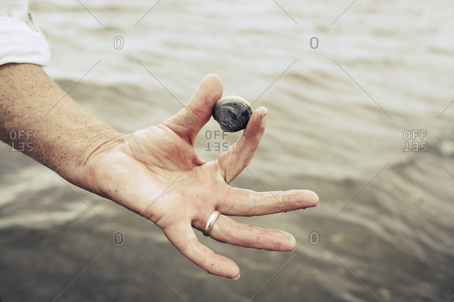 Hand of man holding clam