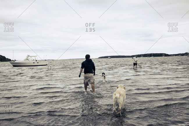 Man and dogs wading in ocean near man clamming