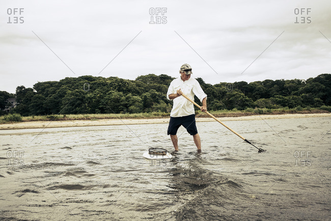 Man wading in ocean waves clamming with rake