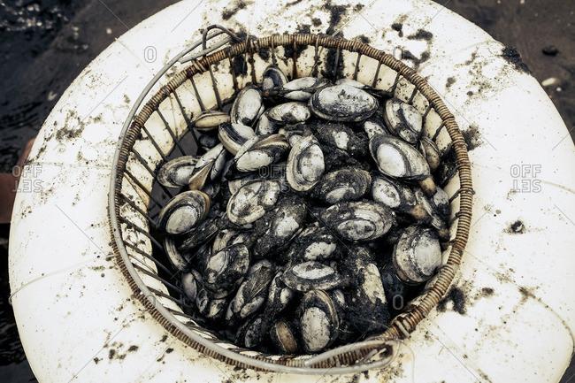 Basket of sandy clams at beach