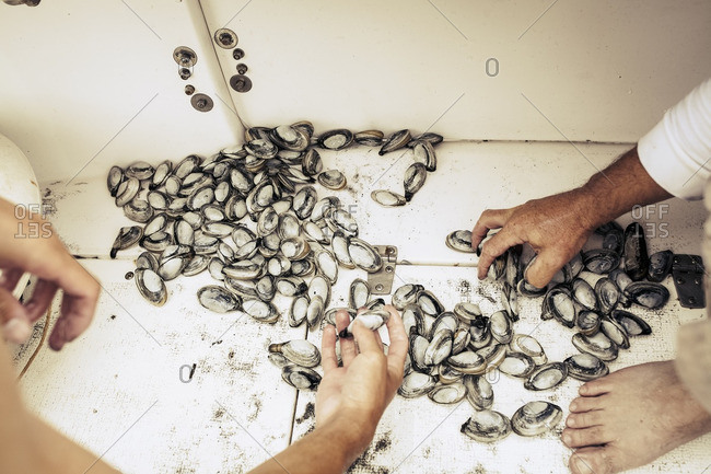 Hands of people checking clams on floor of boat