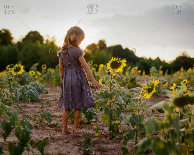 Young girl in field of sunflowers at dusk