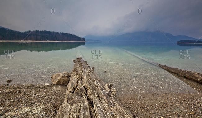 Deadwood on the lakeside