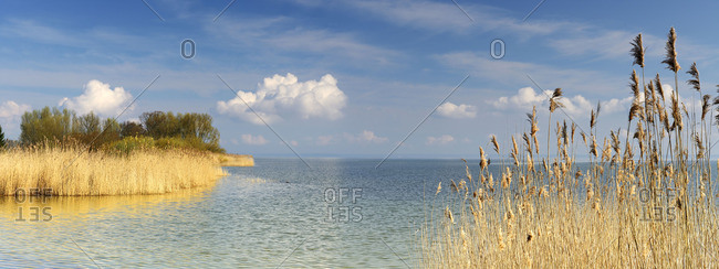 Reeds in a lake in Mecklenburg-Western Pomerania, Germany