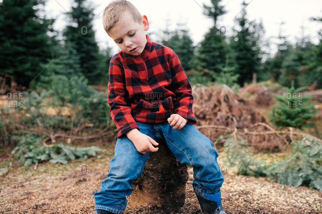 Boy in plaid on tree stump in forest