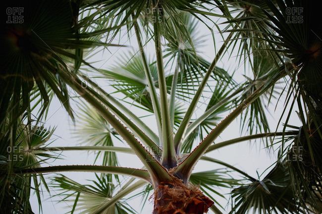 Close-up of palm stalks growing from trunk of tree