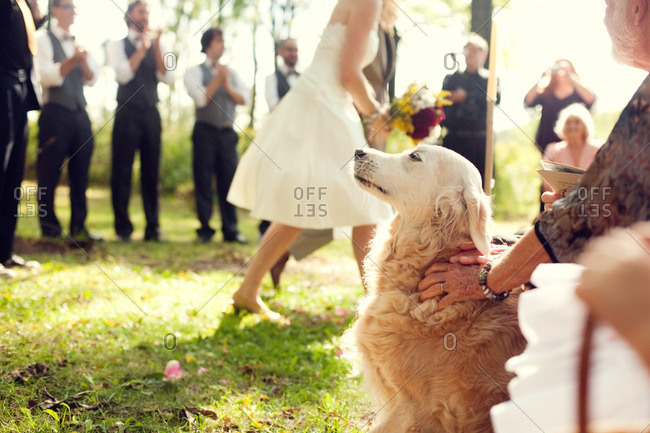 Dog watching from crowd as bride walks down the aisle