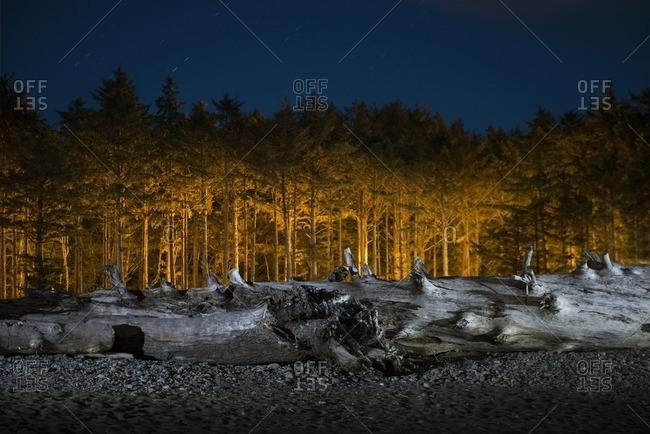 Log on field against trees at dusk