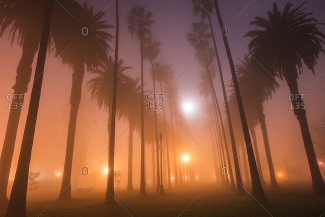 Low angle view of silhouette trees growing in park at dusk during foggy weather
