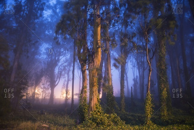 Trees growing on field during foggy weather at dusk